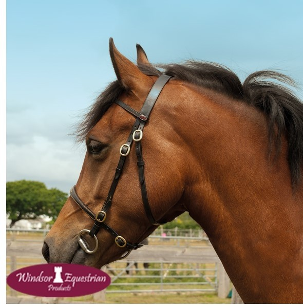 Windsor In-Hand Showing Bridle