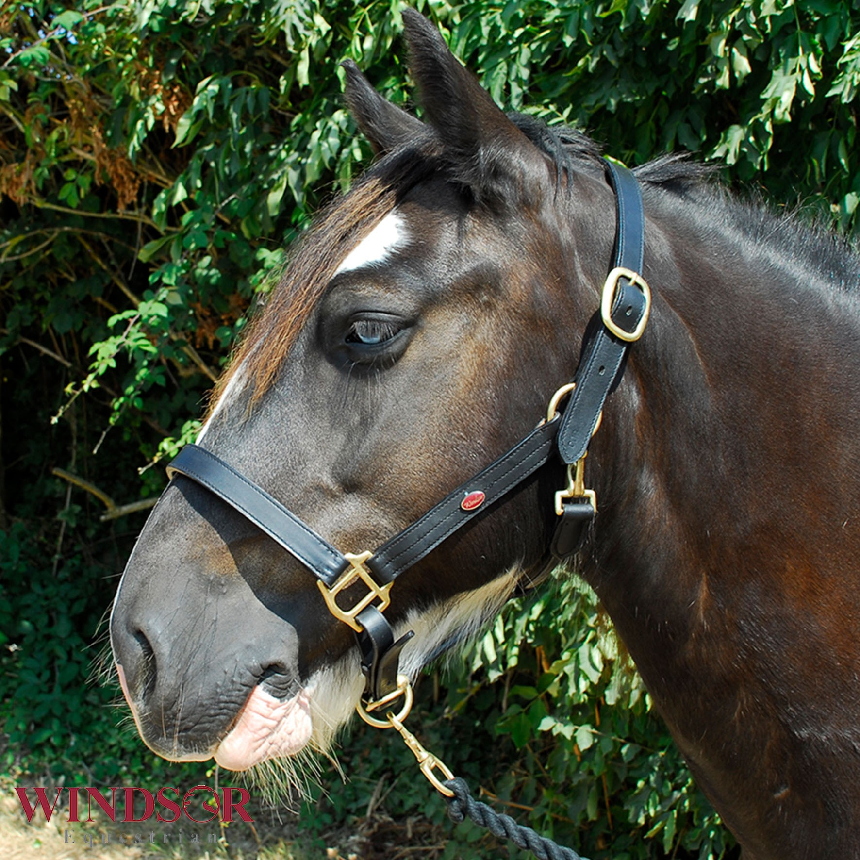 Leather Headcollar by Windsor Equestrian