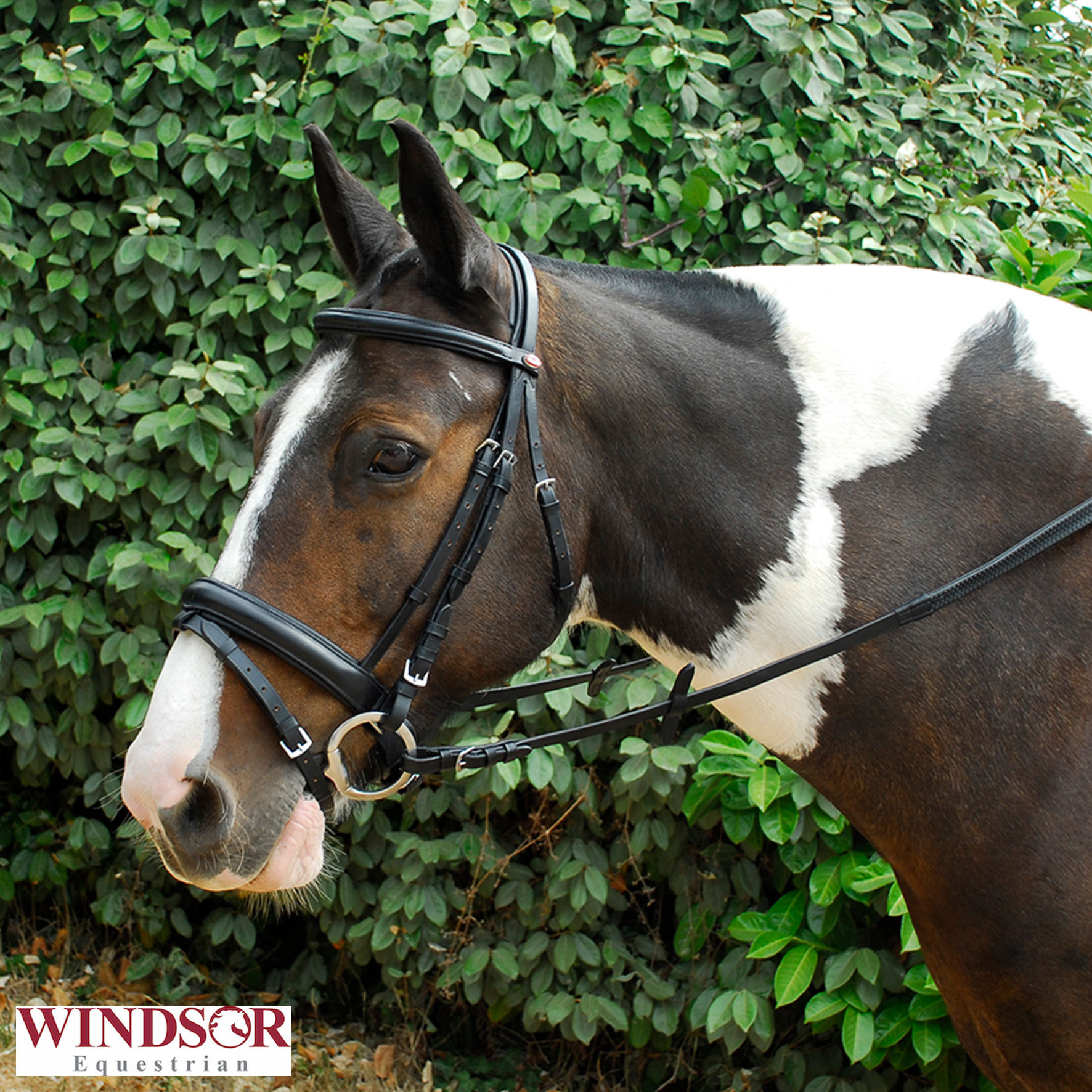 Windsor Leather Comfort Bridle With Crank Style Flash Noseband