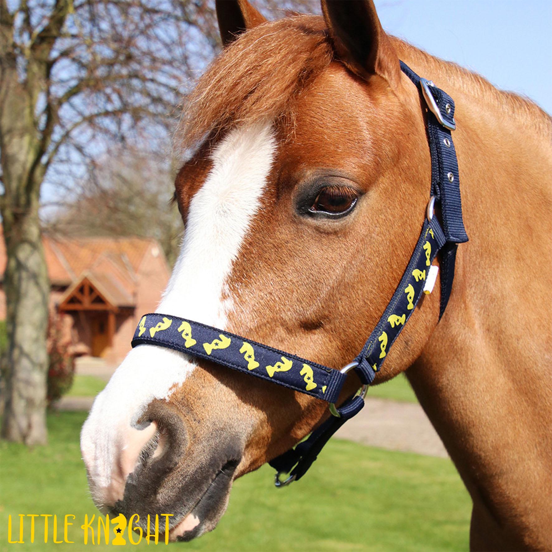 Lancelot Head Collar and Lead Rope